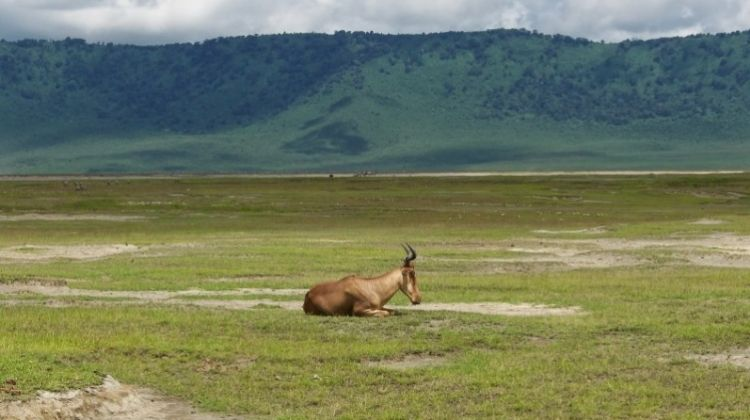 Highlights of Tanzania Safari 5D/4N (Tarangire, Serengeti & Ngorongoro)
