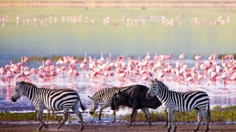 Highlights of Tanzania Safari 6D/5N (Tarangire, Serengeti & Ngorongoro)