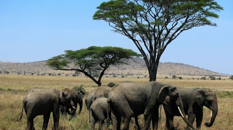 Highlights Of Tanzania South 10 Days
