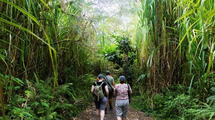 Hiking in Costa Rica and Nicaragua