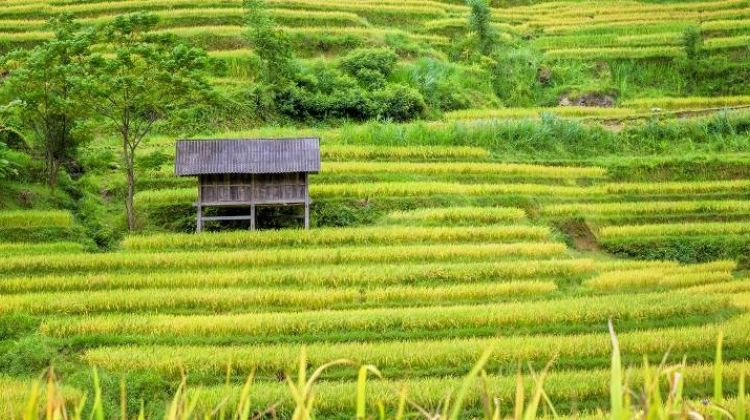 Hill Tribes, Halong Bay & Beyond - 13 days