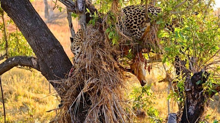 Hluhluwe Imfolozi Safari & Emdoneni Wild Cat