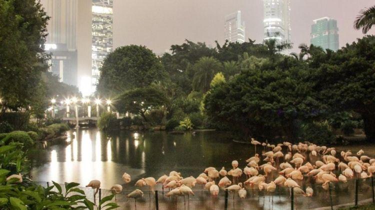 Hong Kong by Moonlight