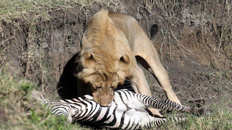 Incredible Tanzania Budget Camping & Safari