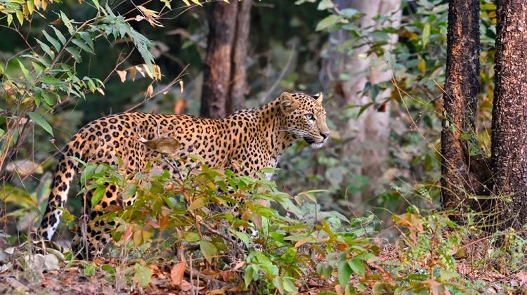 Indian Wildlife Adventure