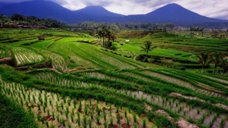 Java & Bali Grand Tour