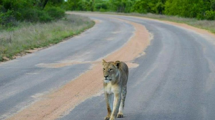 Joburg Soweto Voluntour & Kruger 21D/20N