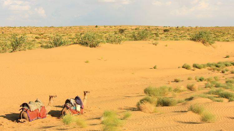 Jodhpur Heritage Tour & Camel Safari