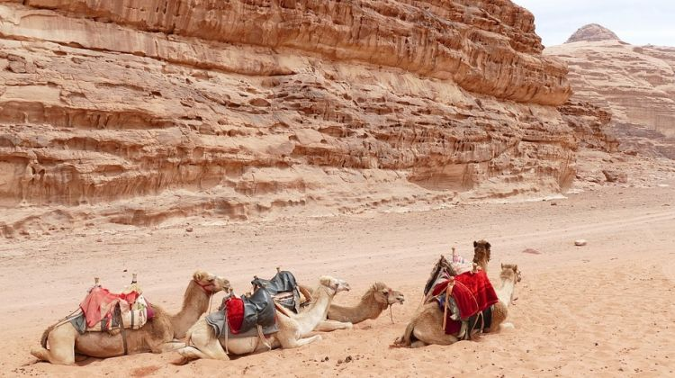 Jordan and Egypt Highlights