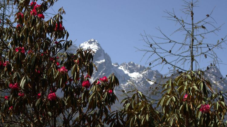 Kanchanjunga Base Camp trek