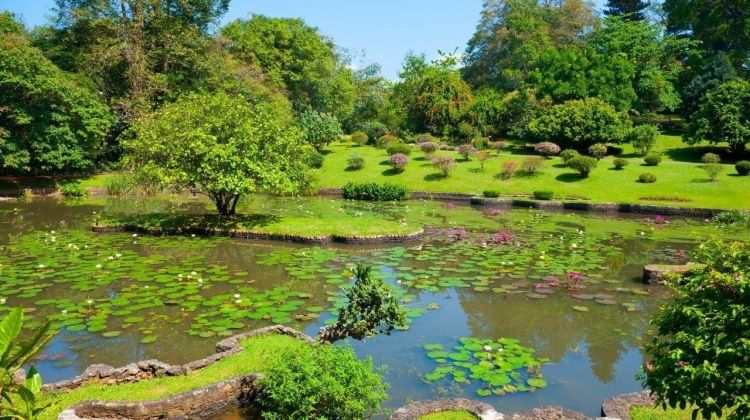 Kandy Full-day Tour With Lunch, Private Excursion