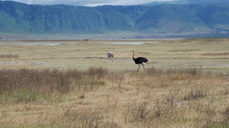 Kenya & Tanzania 4WD Safari Adventure 10D/9N