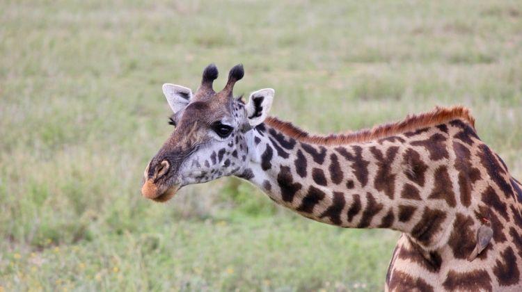 Kenya & Tanzania Safari Under Canvas
