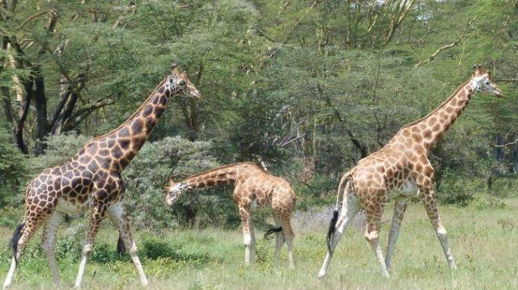 Kenya & Tanzania Trails - 13 days