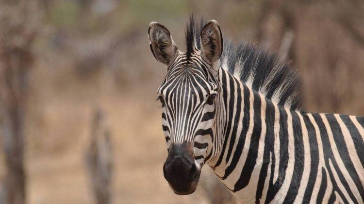 Kenya & Tanzania Wildlife Discoverer
