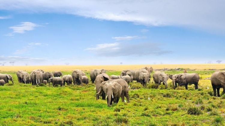 Kenya Classic, Sentrim Lodges - Private Tour