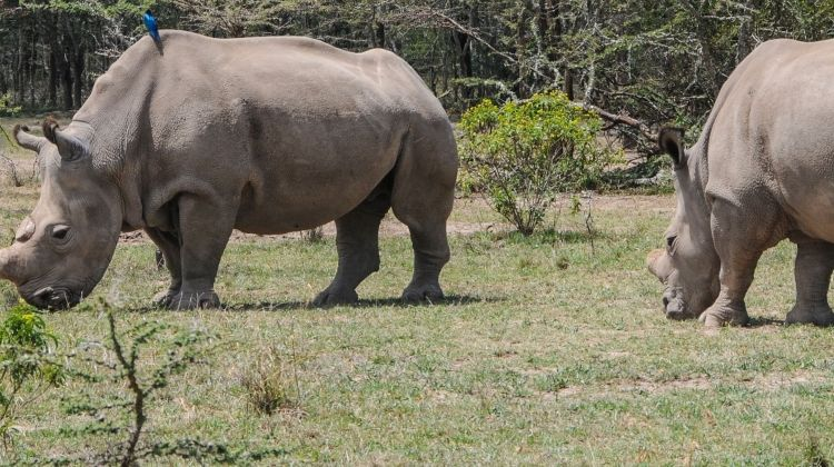 Kenya Expedition: The Last Northern White Rhinos