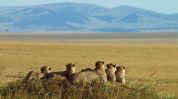 Kenya Family Wildlife Quest - Camping