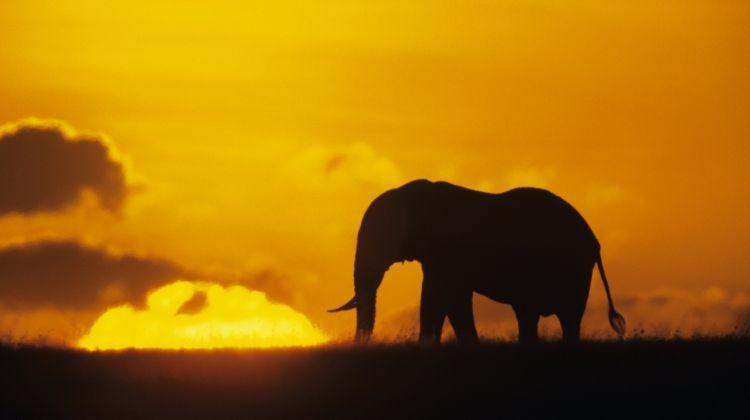 Kenya Family Wildlife Quest