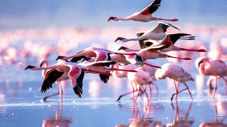 Kenya Highlights Safari 4D/3N (Lake Nakuru & Samburu)