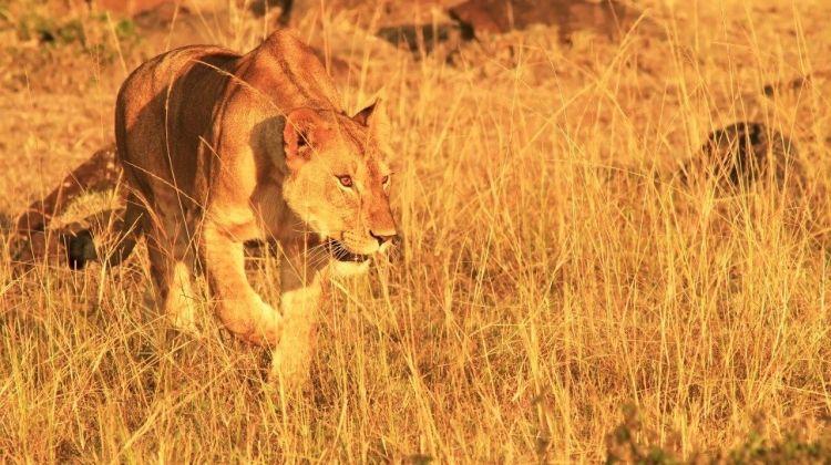 Kenya Highlights