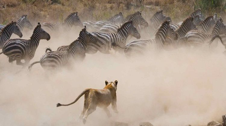 Kenya Safari & Beach Holiday