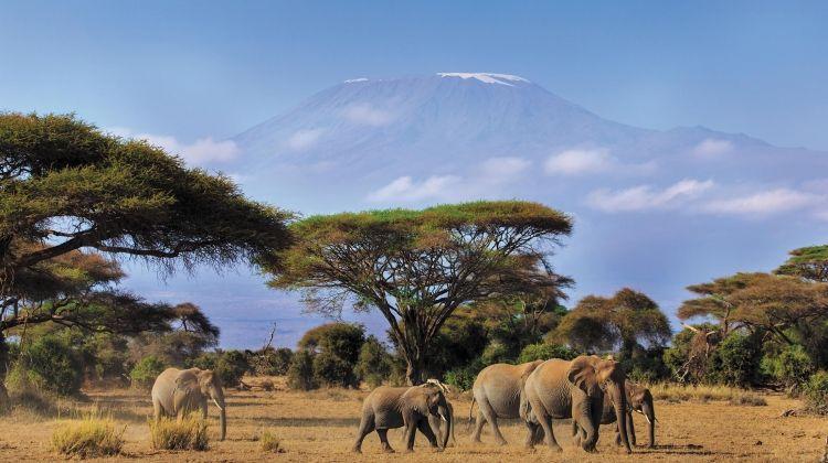 Kenya Safari Experience - Independent