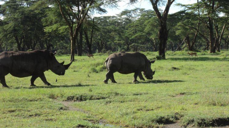 Kenya Safari Migration 2016 & Cycling at Hells Gate Park
