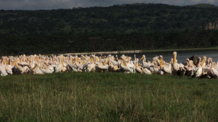 Kenya Safari Migration & Cycling at Hells Gate Park