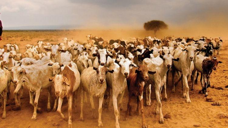 Kenya Safari Under Canvas