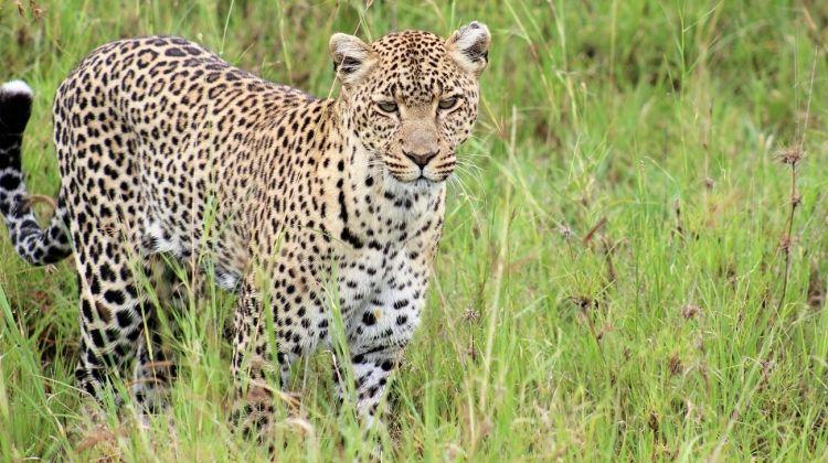 Kenya  Tanzania Adventure Accommodated 13 Days