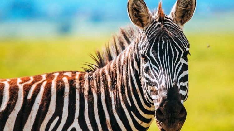 Kenya to Cape Town Accommodated 43 Days