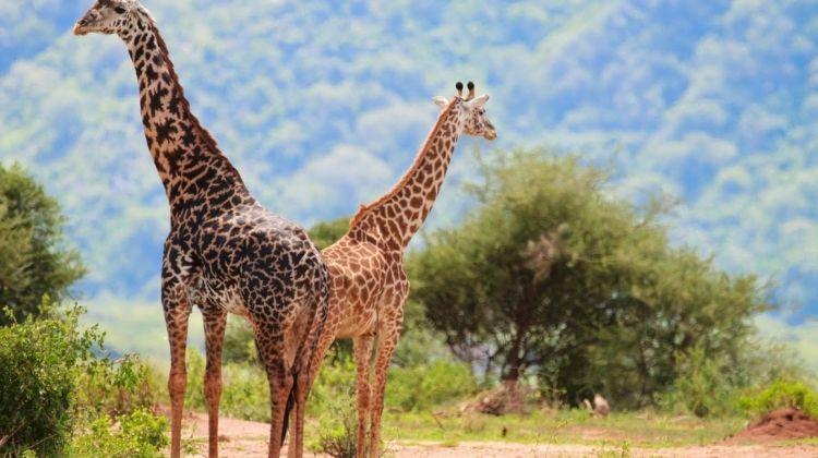 Kifaru Safari, Tanganyika Wilderness Camps - Private Tour