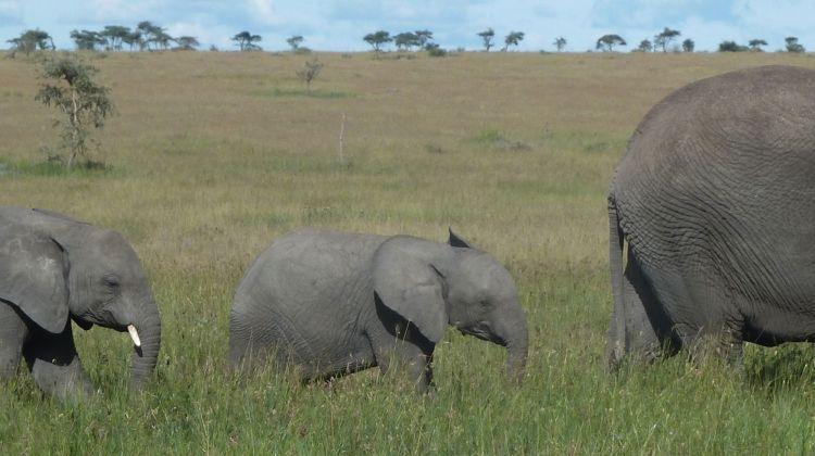 Kilimanjaro & Serengeti Adventure