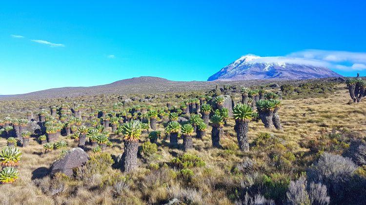 Kilimanjaro Climbing via Lemosho Route 8 Day