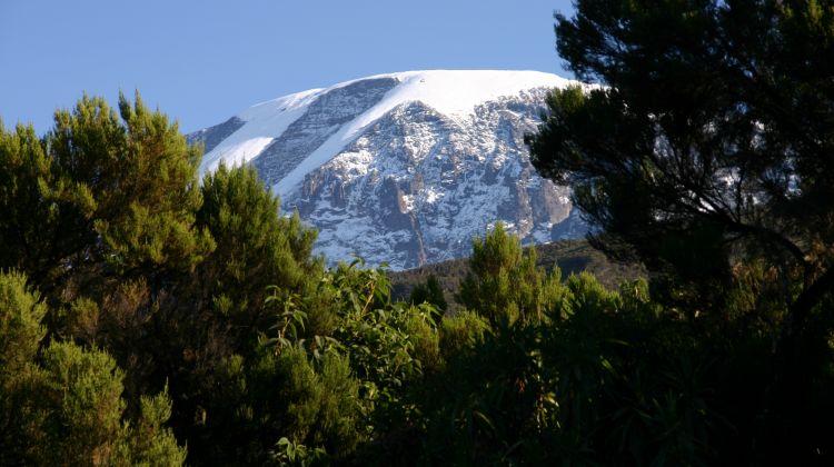 Kilimanjaro Day Tour