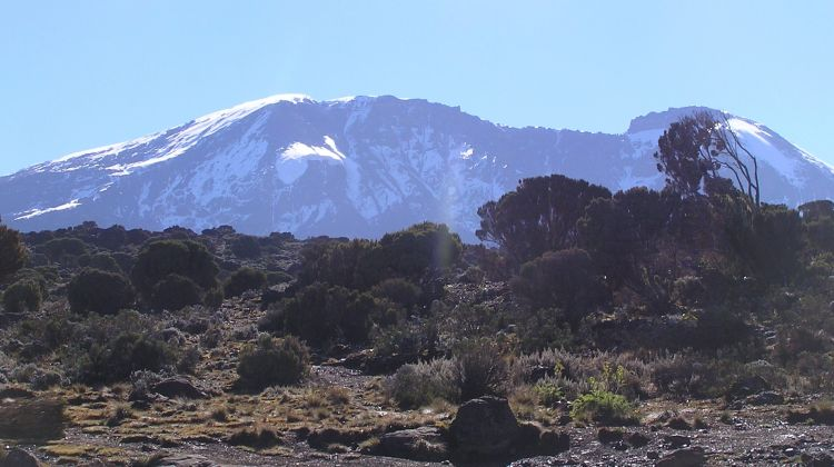 Kilimanjaro - Lemosho route, 8 days