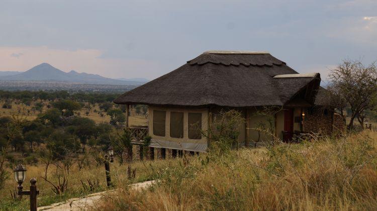 Kilimanjaro Machame Route & Serengeti Safari: 12 Days