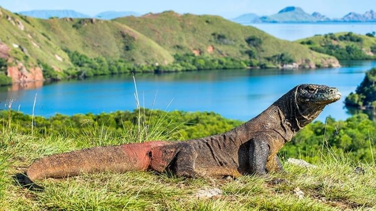 Komodo Dragon Adventure 4D/3N (from Labuan Bajo)