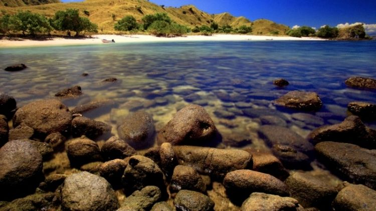 Komodo Dragon Expedition 7D/6N