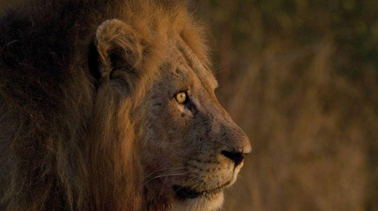 Kruger and Mozambique Explorer
