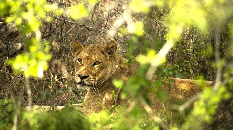 Kruger, Eswatini & Lesotho Safari 14D/13N