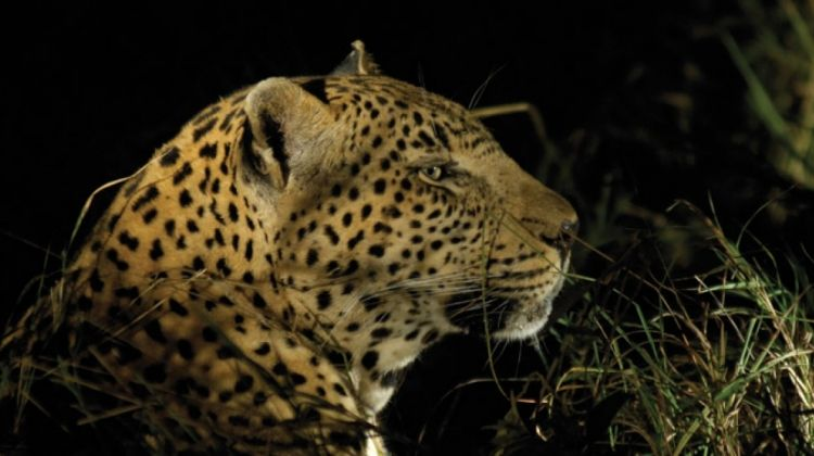 Kruger Experience - Lodge (5 days)