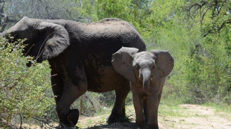 Kruger National Park 3D/2N