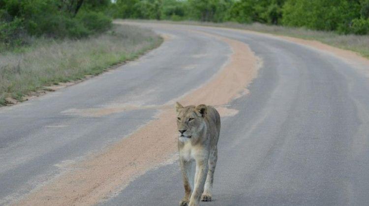 Kruger National Park 4D/3N