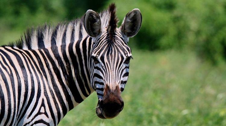 Kruger Safari 4 Days