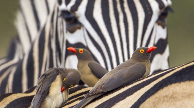 Kruger, Swaziland and South Africa's Garden Route