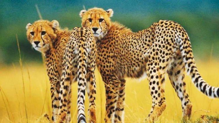 Kruger to Kenya - 33 days