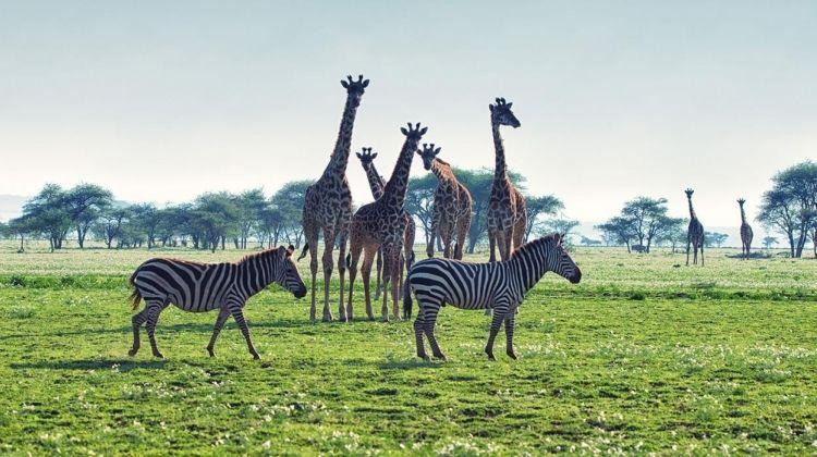 Kruger, Victoria Falls & Zanzibar