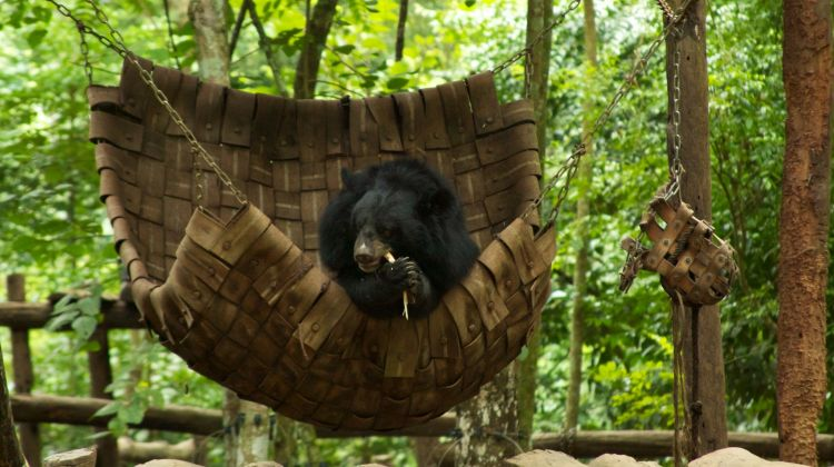 Kuang Si Waterfall & Bears Rescue Centre - Full Day Tour